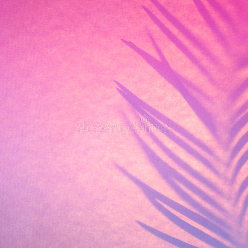 Shadow of tropical leaf in trendy duotone backlight. Abstract background in pink neon colors.  royalty free stock photography