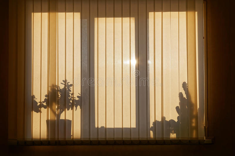 Shadow on window with Venetian blinds royalty free stock photography