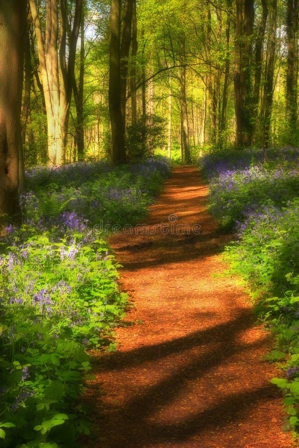 Shadows across bluebell path stock photos