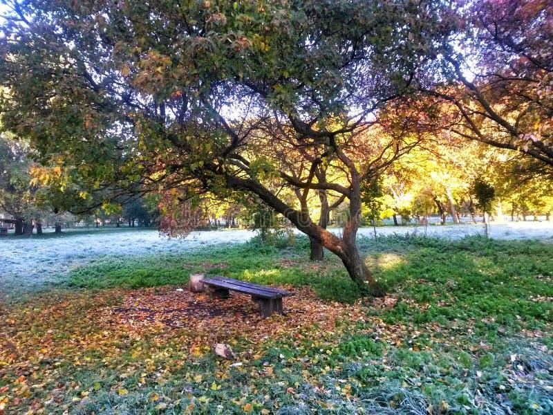 shadows den blåa långa naturen för hösten skyen arkivfoton