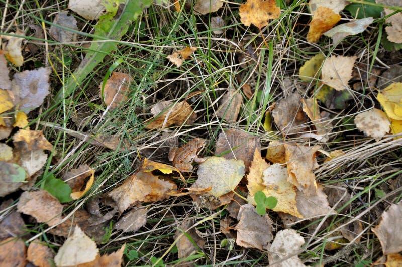 shadows den blåa långa naturen för hösten skyen Liten brun groda på en bakgrund av gräs för sidor för guling grön och torr, arkivbild