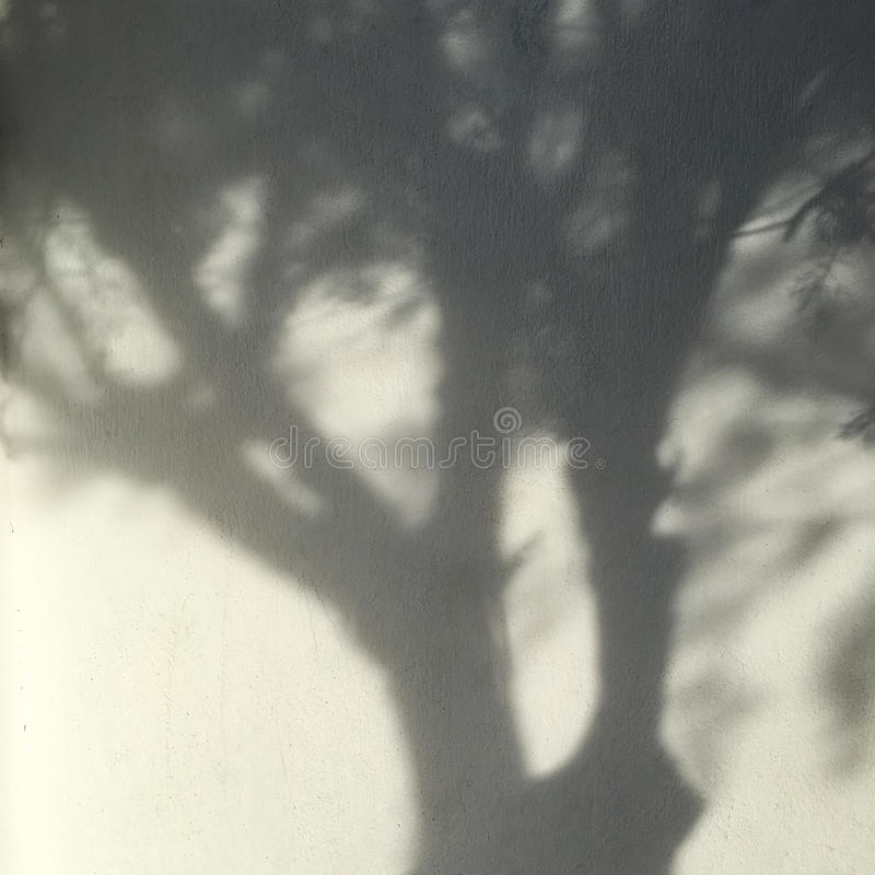 Free Shadows From The Trees Falling On The Wall Stock Images - 93852664