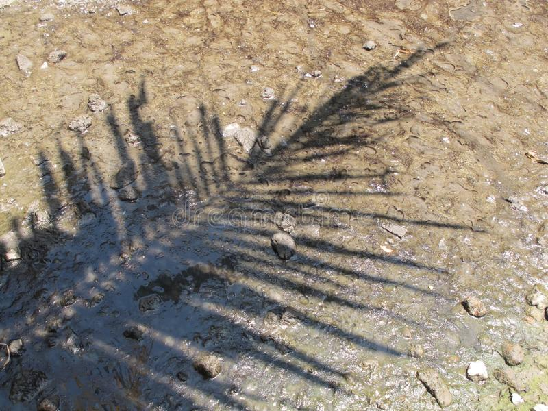 Shadows of the Leaves of Coconut Trees on Watery Soils.  stock photo