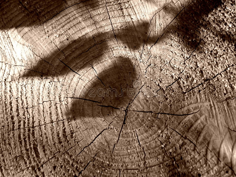 Download Shadows Of The Missing Branches Stock Photo - Image of outdoors, material: 225008