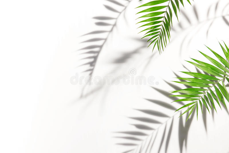 Shadows from palm trees on a white wall royalty free stock photos