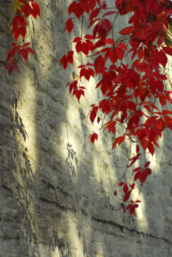 Shadows of red royalty free stock photography