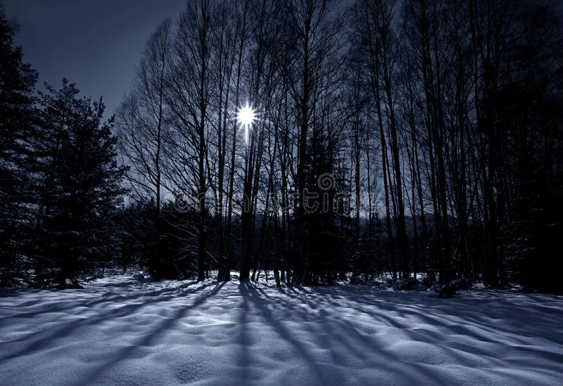 Download Shadows on snow stock photo. Image of evening, flake - 23329518