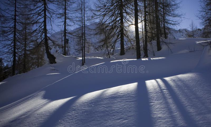 Download Shadows on the snow stock image. Image of loneliness, pine - 7844189
