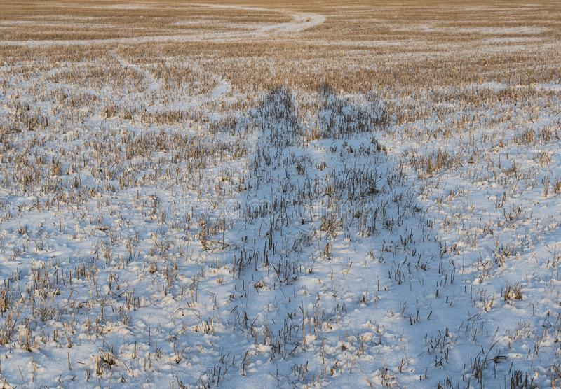Shadows at sunset. Long shadows of people on a snowy field stock photos