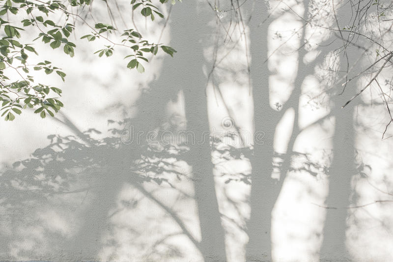 Shadows from trees on a plastered wall. Sunlight and shadows on the wall from the branches of trees royalty free stock photography