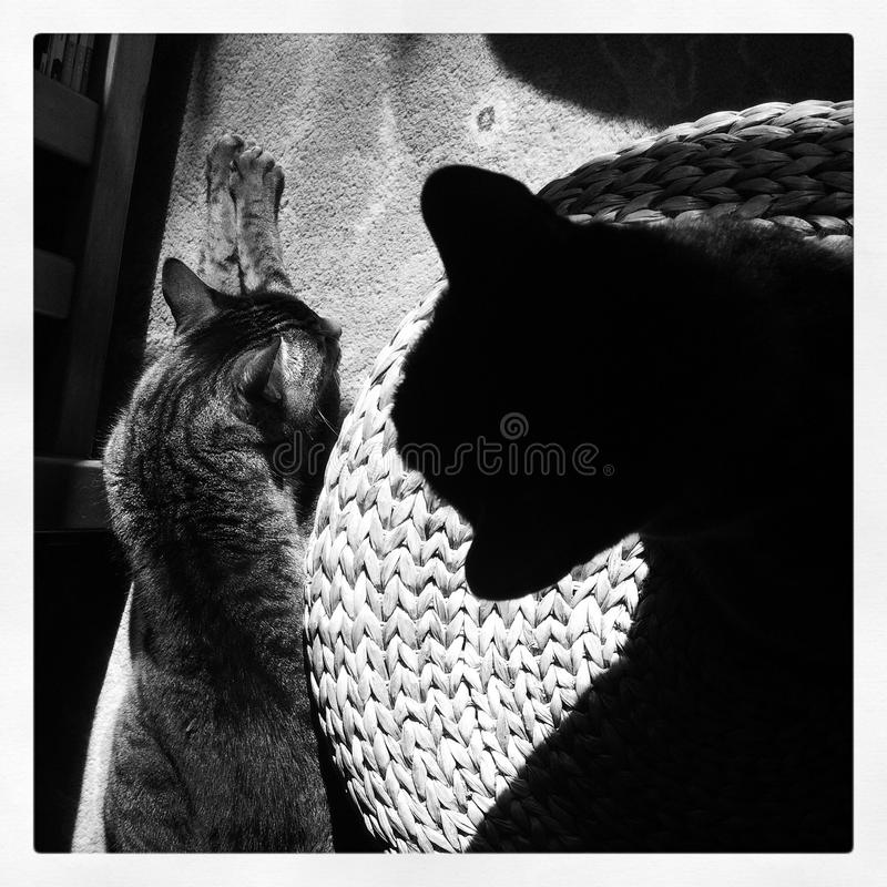 Shadows of two cats royalty free stock image