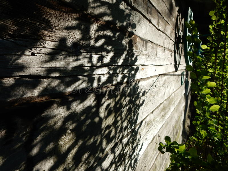 Shadows on wooden wall royalty free stock photo