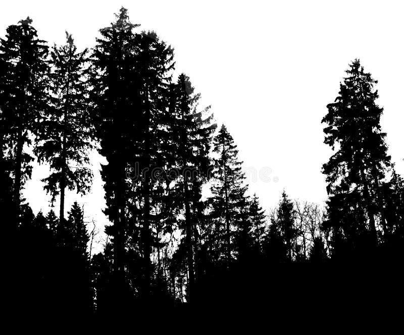 Download Shadowtrees στοκ εικόνες. εικόνα από ταχύτητας, κλίση - 13187878