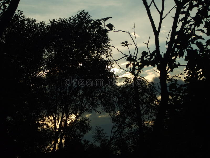 Shadowy sunset in forest royalty free stock photography