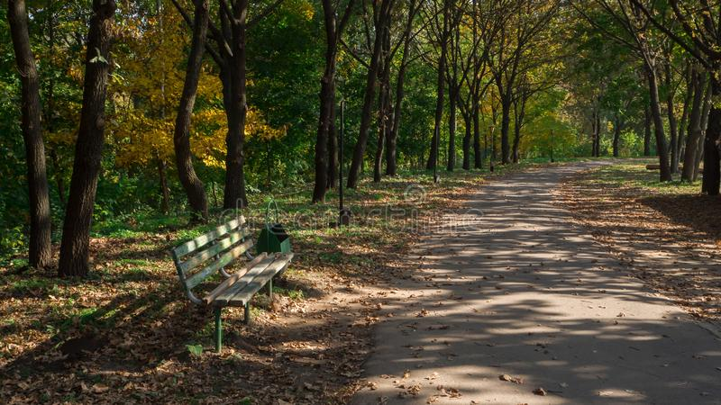 Shady alley with a bench in a sunny autumn park. stock image