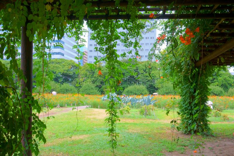 Shady Arbor In Tokyo Japanese Garden Stock Image Image Of Japan