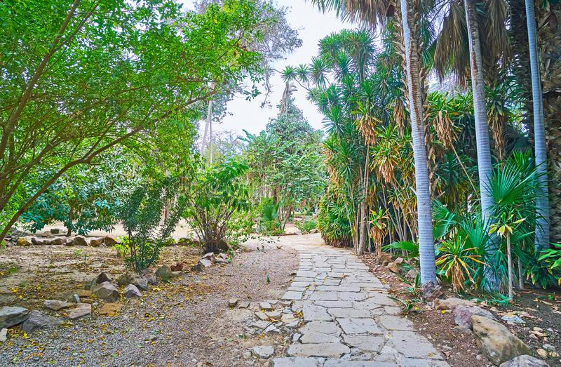 Shady footpath in Manial Palace English garden, Cairo, Egypt. The walk along the shady footpath in Manial Palace English garden, located on the bank of Nile royalty free stock photography