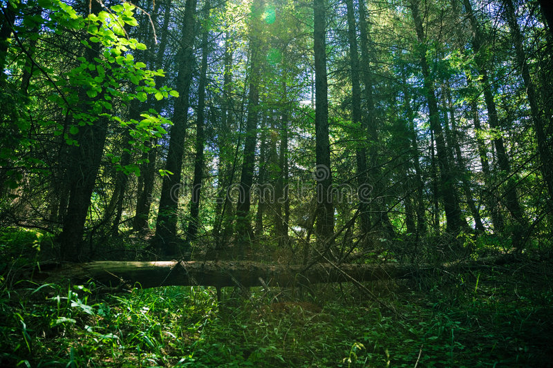 Download Shady forest stock photo. Image of green, tree, trees - 2778452
