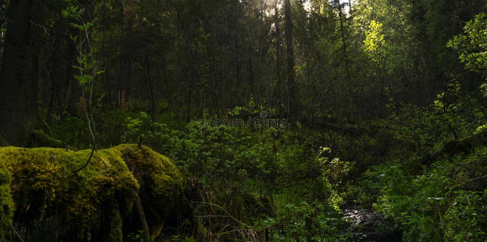 Shady forest thicket stock photography