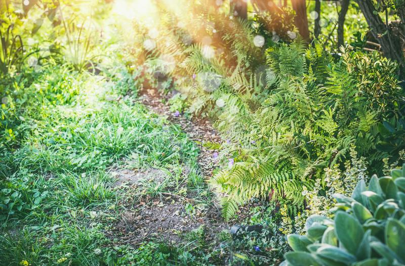 Shady garden with fern and sun rays, summer outdoor royalty free stock images