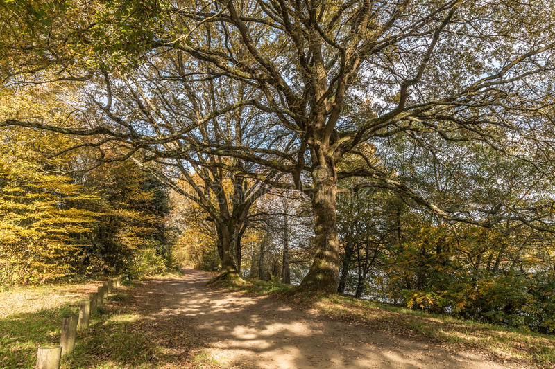 Shady path in autumn stock images