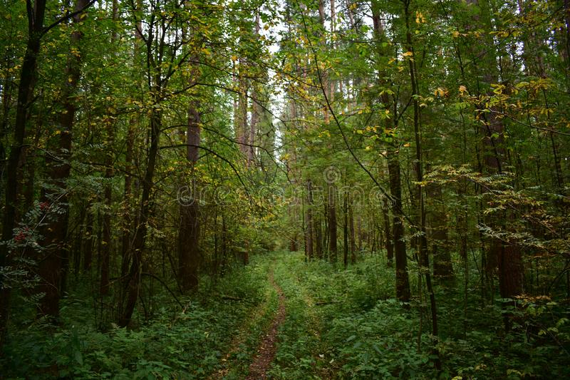 The shady road, the smell of the autumn forest is special, it feels amazing freshness, coolness of the approaching stock photos