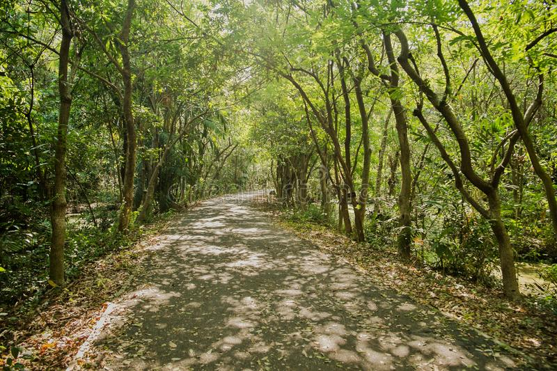 Shady walkway with natural sunlight among the lush green forest in summer. stock photos