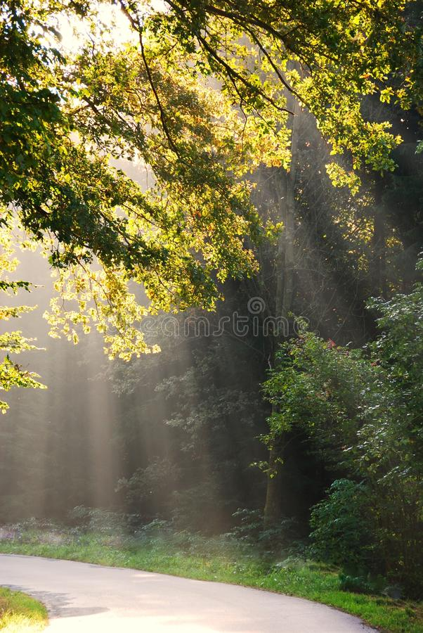 Shafts of sunlight royalty free stock photography