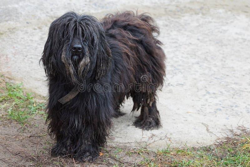 Shaggy красивая собака стоит на песке в дворе стоковые фото