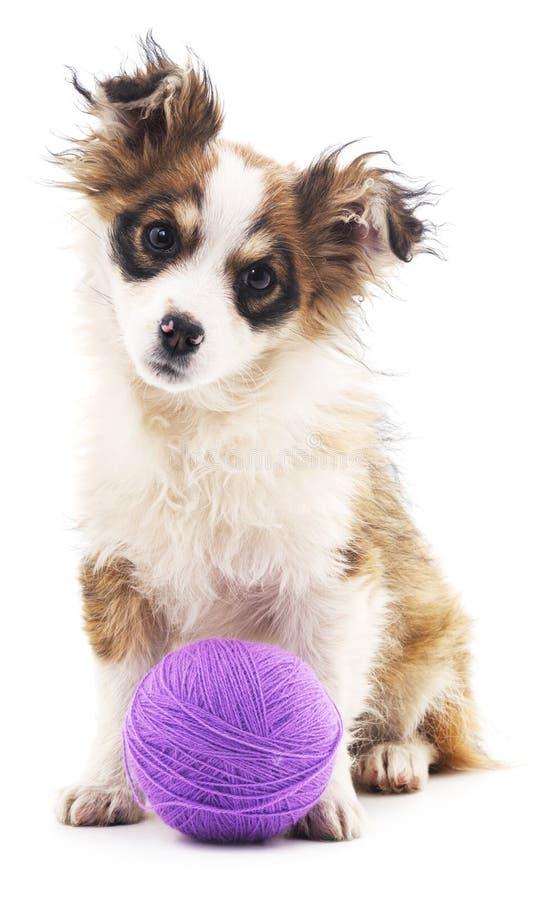 Shaggy собака с фиолетовыми шариками стоковое изображение