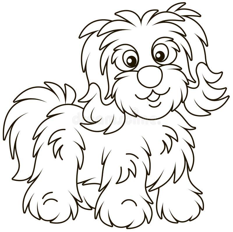 Free Shaggy Bichon Avanese Dog Royalty Free Stock Photo - 137116635