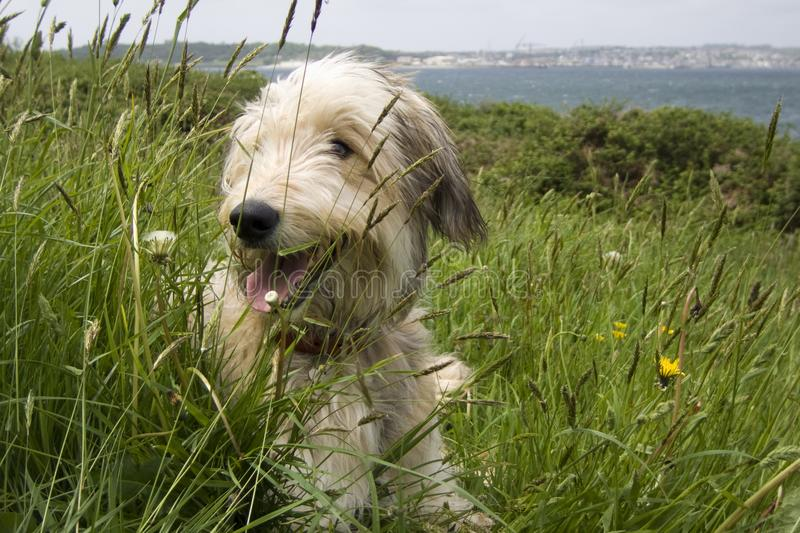 Smiling dog stock images