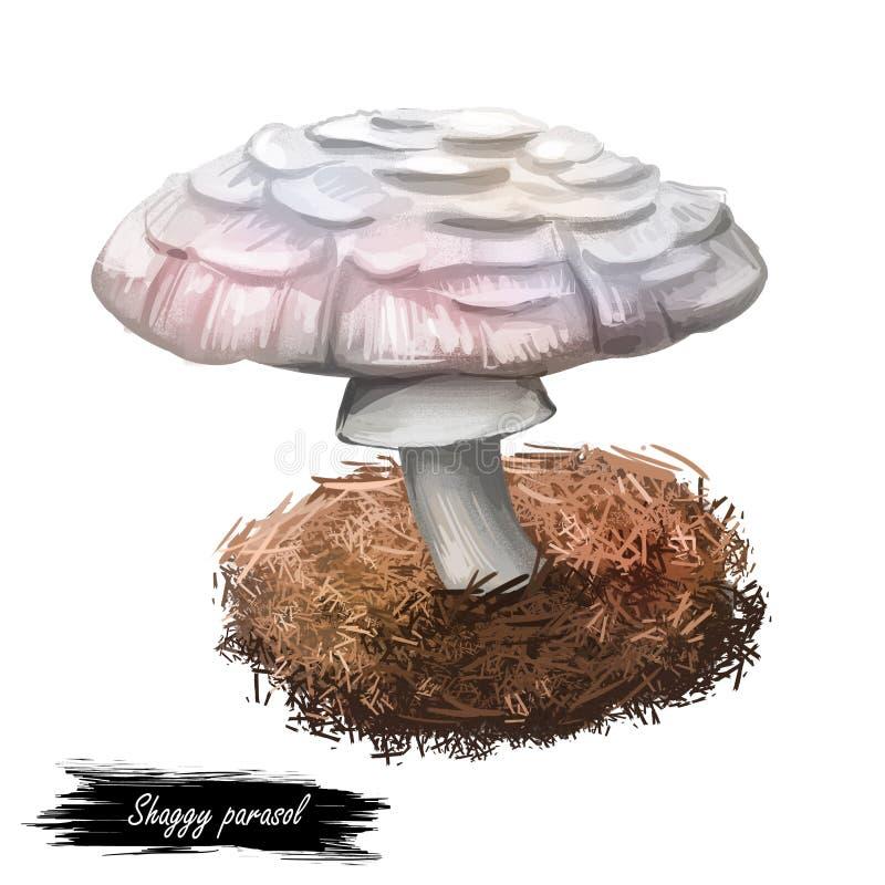 Shaggy parasol, Chlorophyllum rhacodes or rachodes mushroom closeup digital art illustration. Agaric with thick brown scales. Mushrooming season, plant of stock images