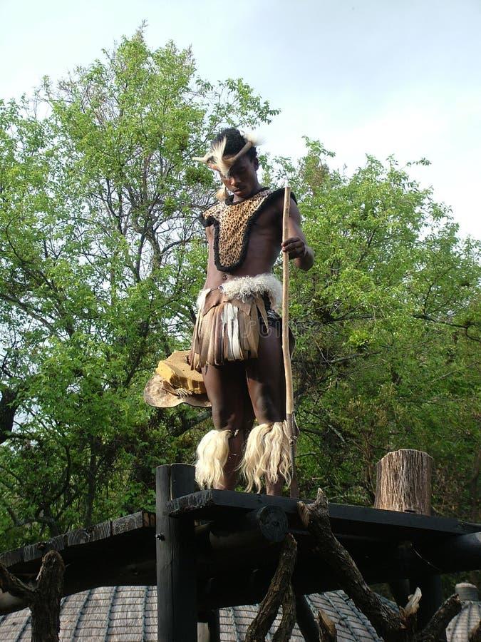 SHAKALAND, ÁFRICA DO SUL - CERCA DO NOVEMBRO DE 2011: Protetor não identificado dos suportes do dançarino de Zulu Warrior fotos de stock