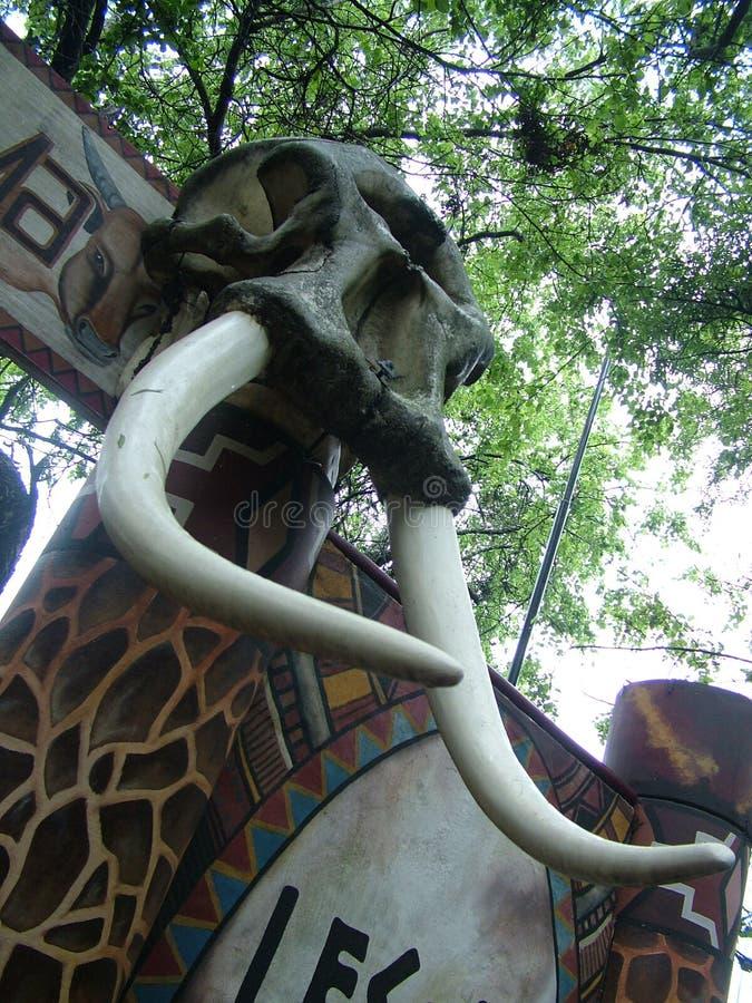 SHAKALAND, ZUID-AFRIKA - CIRCA NOVEMBER 2011: Olifantsschedel met slagtanden bij ingangspoort royalty-vrije stock fotografie