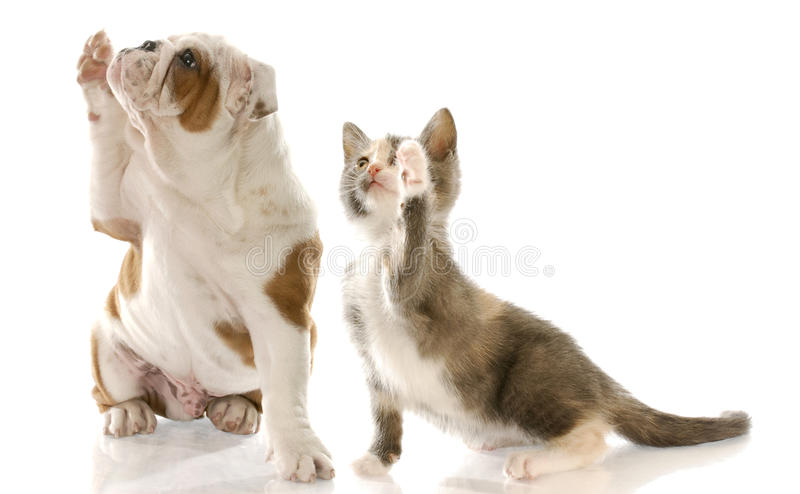 Shake A Paw Stock Images