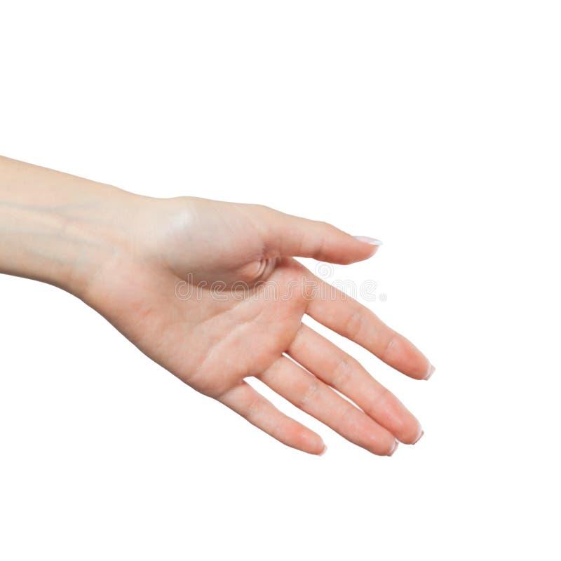 Shaking female hand isolated on white background. Handshake woman royalty free stock photo