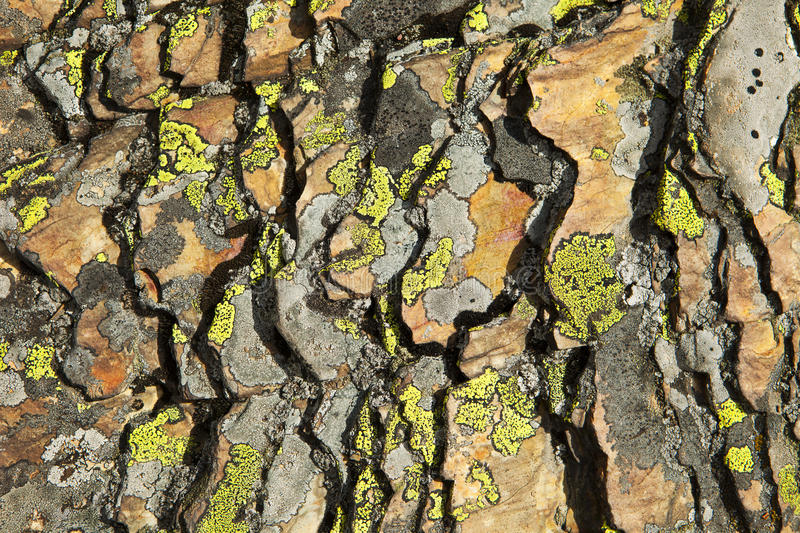 Shale and Lichen Abstract stock photos