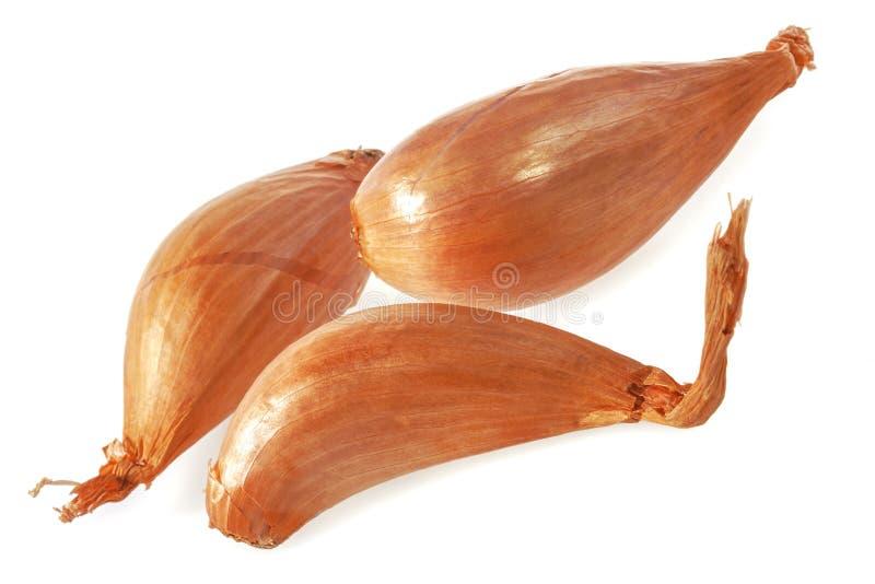 Shallot onions. royalty free stock photo