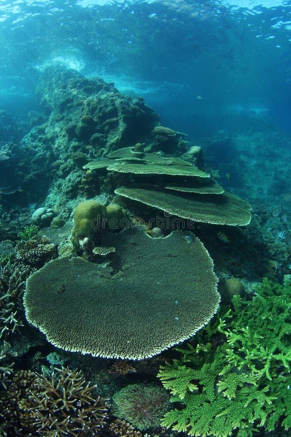Shallow coral sea