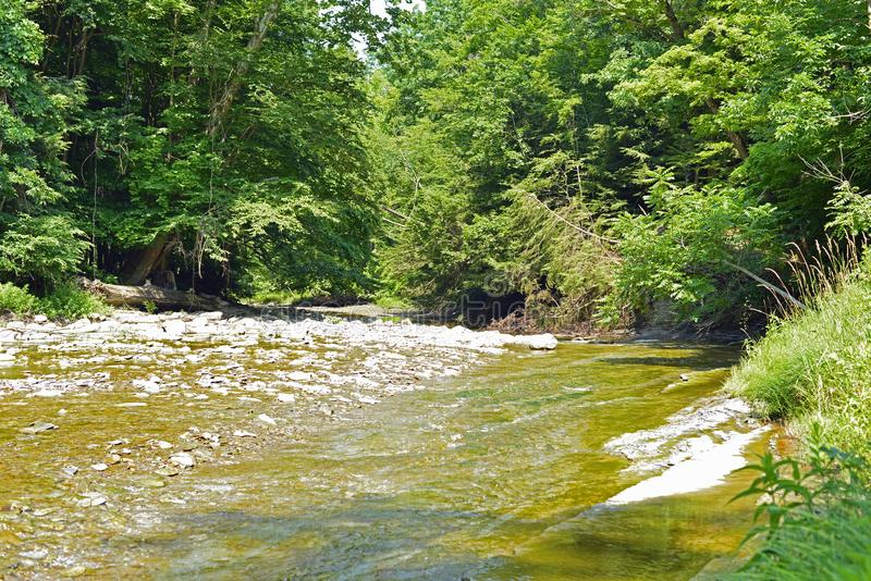 Shallow creek flowing on the edge of a deep cut bank. On a sunny day. Water ripples royalty free stock image