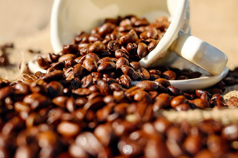 Shallow Focus of Coffee Beans on White Ceramic Cup royalty free stock photo