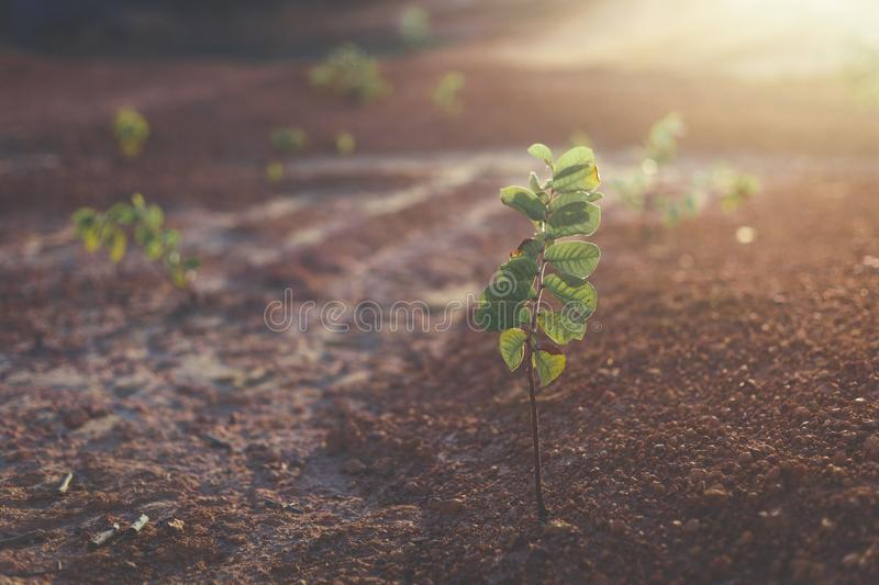 Shallow Focus Photo of Green Potted Plant royalty free stock photos