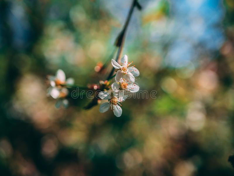 Shallow Focus Photo of White Flowers stock images
