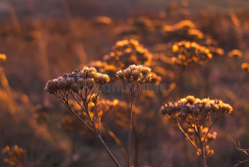 Shallow Focus Photo of White Petal Flower during Orange Sunset stock photography