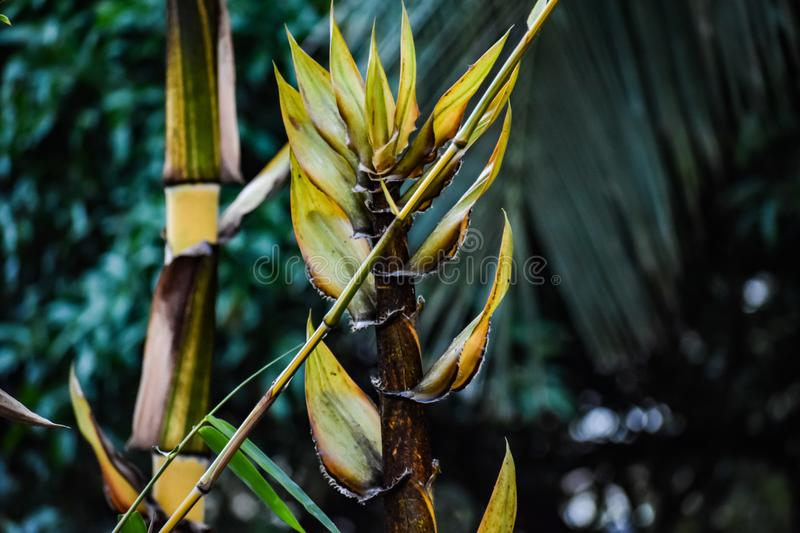 Shallow Focus Photograph of Yellow and Green Leaf Plant stock image