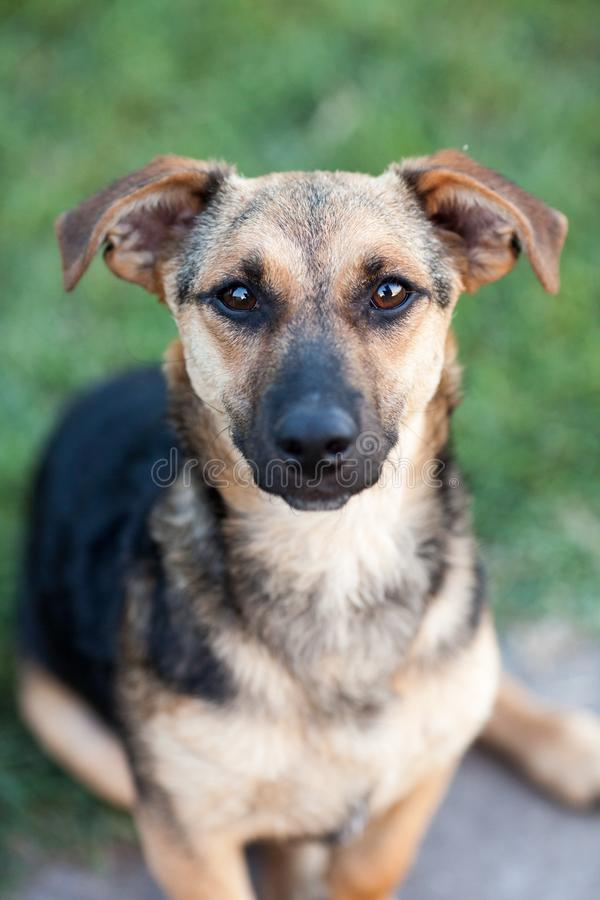 Shallow Focus Photography of Black and Brown Dog stock photos