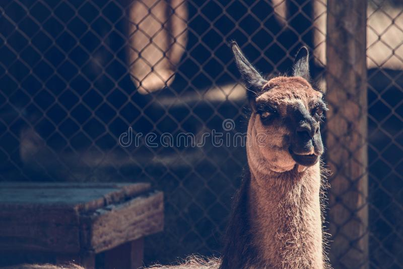 Shallow Focus Photography Of Brown And Black Animal Free Public Domain Cc0 Image