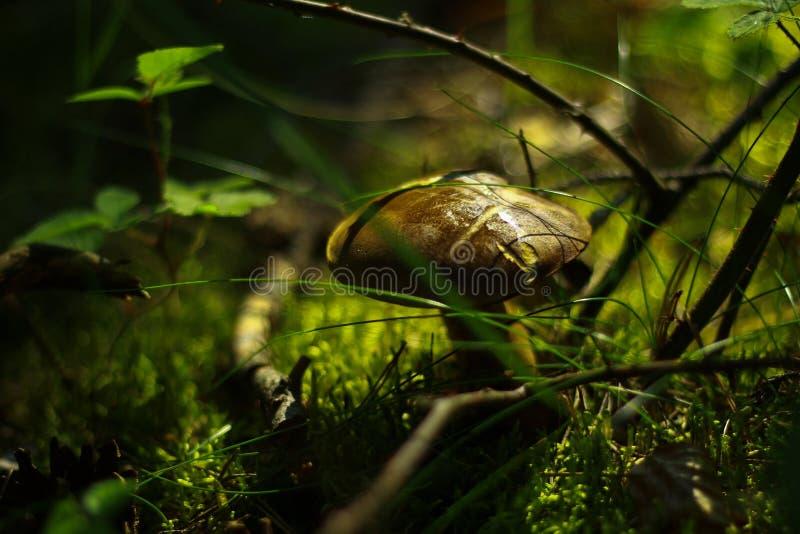 Shallow Focus Photography of Brown Mushroom stock photos