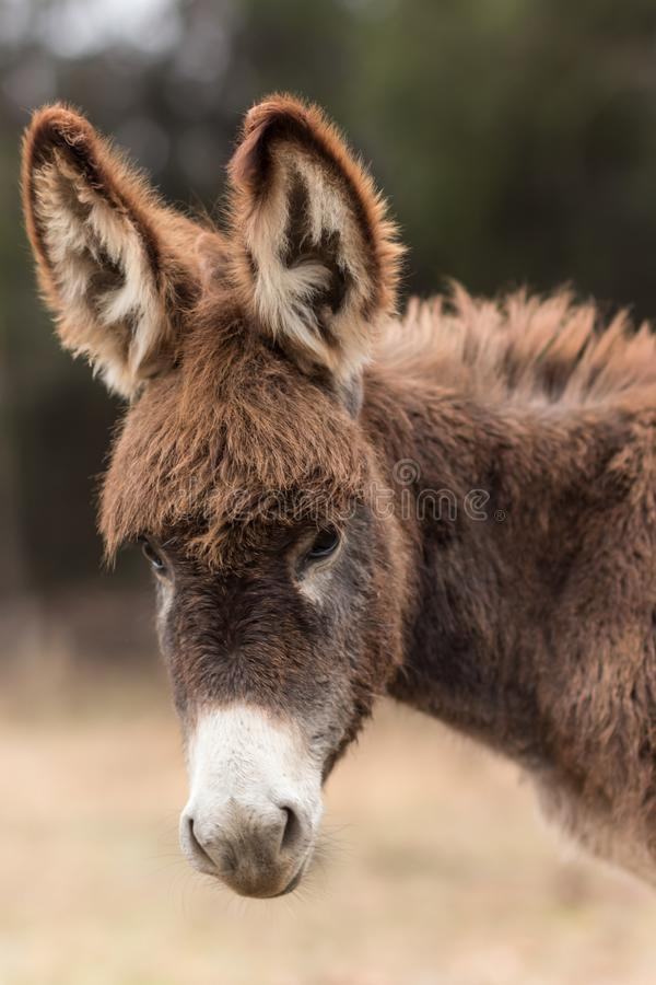 Shallow Focus Photography of Brown and White Donkey stock photo